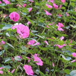 IMG 0971 270x270 «Растения нашего парка»