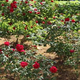 IMG 1046 270x270 «Растения нашего парка»