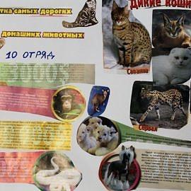 IMG 4233 270x270 День защиты животных