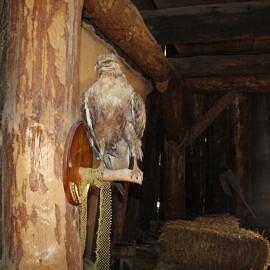 IMG 5692 270x270 Экскурсия в Красные пещеры и парк «Викинг»