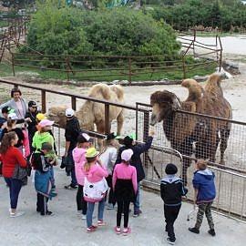 IMG 1613 13 05 19 04 43 270x270 Путешествие по парку «Тайган»