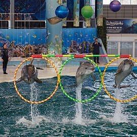 IMG 4815 270x270 Посещение дельфинария